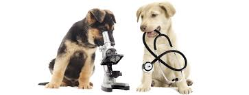Puppies with microscope and stethoscope